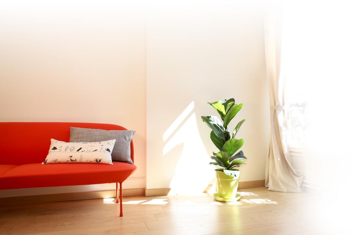 canape-plante-fenetre