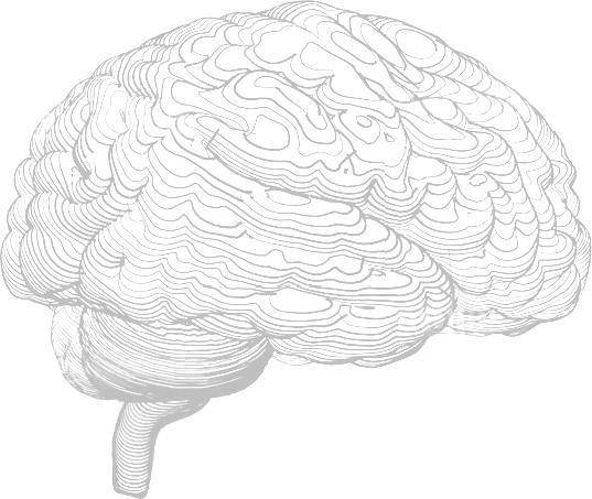 cerveau-illus